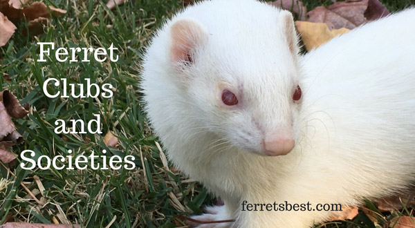 Ferret Clubs and Societies