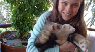 Are Ferrets Good Pets?