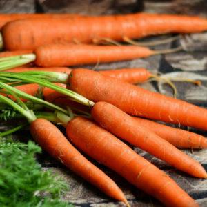 Can-ferrets-eat-carrots