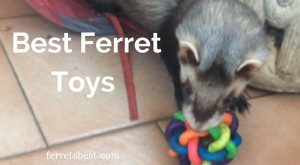 Toys ferrets love