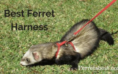 Ferret Harness