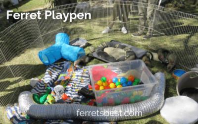 Ferret PlayPens