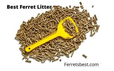 The Best Ferret Litter