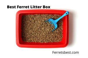 Best Ferret Litter Box