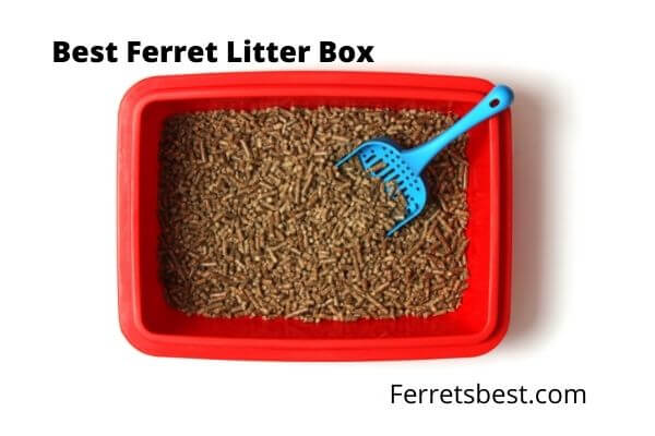 Best Ferret Litter Pan – Types and Styles