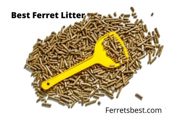 Best Ferrets Litter