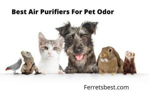 Best air purifiers for ferret odor